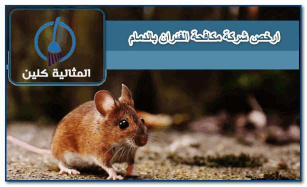 ارخص شركة مكافحة الفئران بالدمام